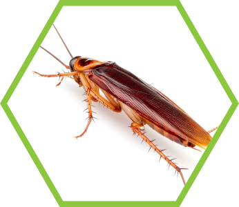 pest-control-cockroaches_2