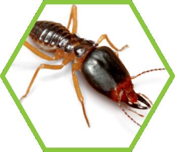 pest-control-termites_2